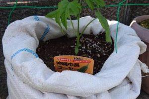 【家庭菜園】つるもの・トマト・ししとう・パッションフルーツ【植え付け】04