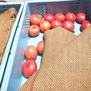 s-【旬の野菜】野菜の行商がトラックでやってきた01