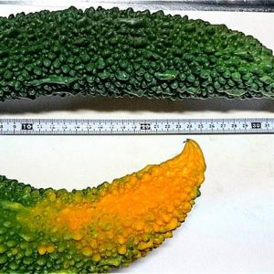 s-【家庭菜園】トマト・ゴーヤー・ナスビなどの成長記録【11週間後】05